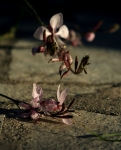 gaura_MG_3724-copy